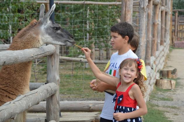 zoopark lama